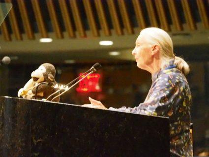 Dr. Jane Goodall Photo by David Willard