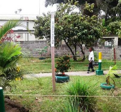 Austrian Alliance for Climate Plants Peace Pole San Isidro, Choco Columbia